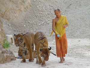 tiger-temple-image-taken-from-wikipedia