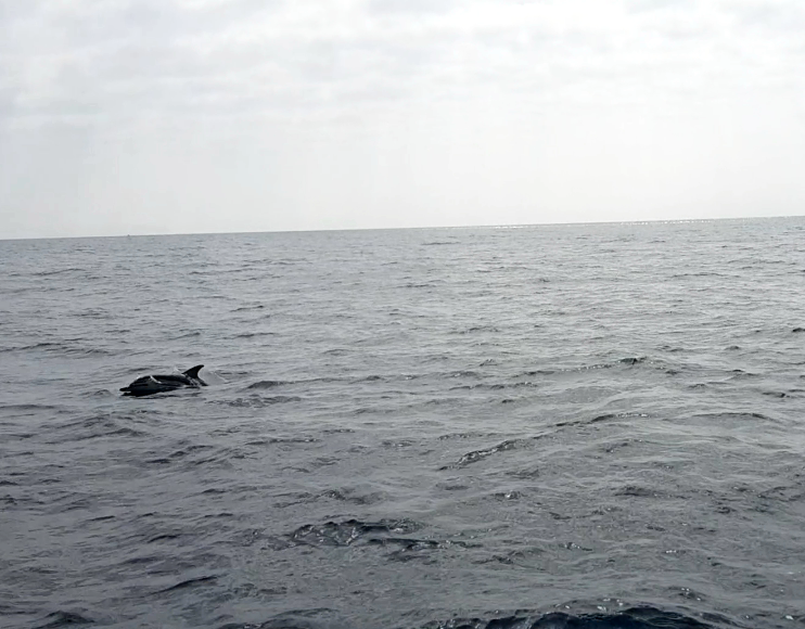A dolphin experience to remember