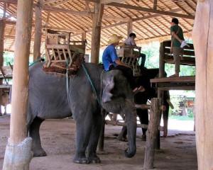 elephant-tourism-image-taken-from-earsasia.org